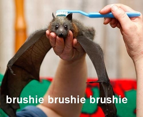 The Brushie Bat